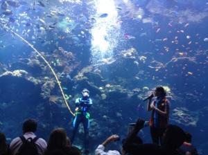 Diver Mark