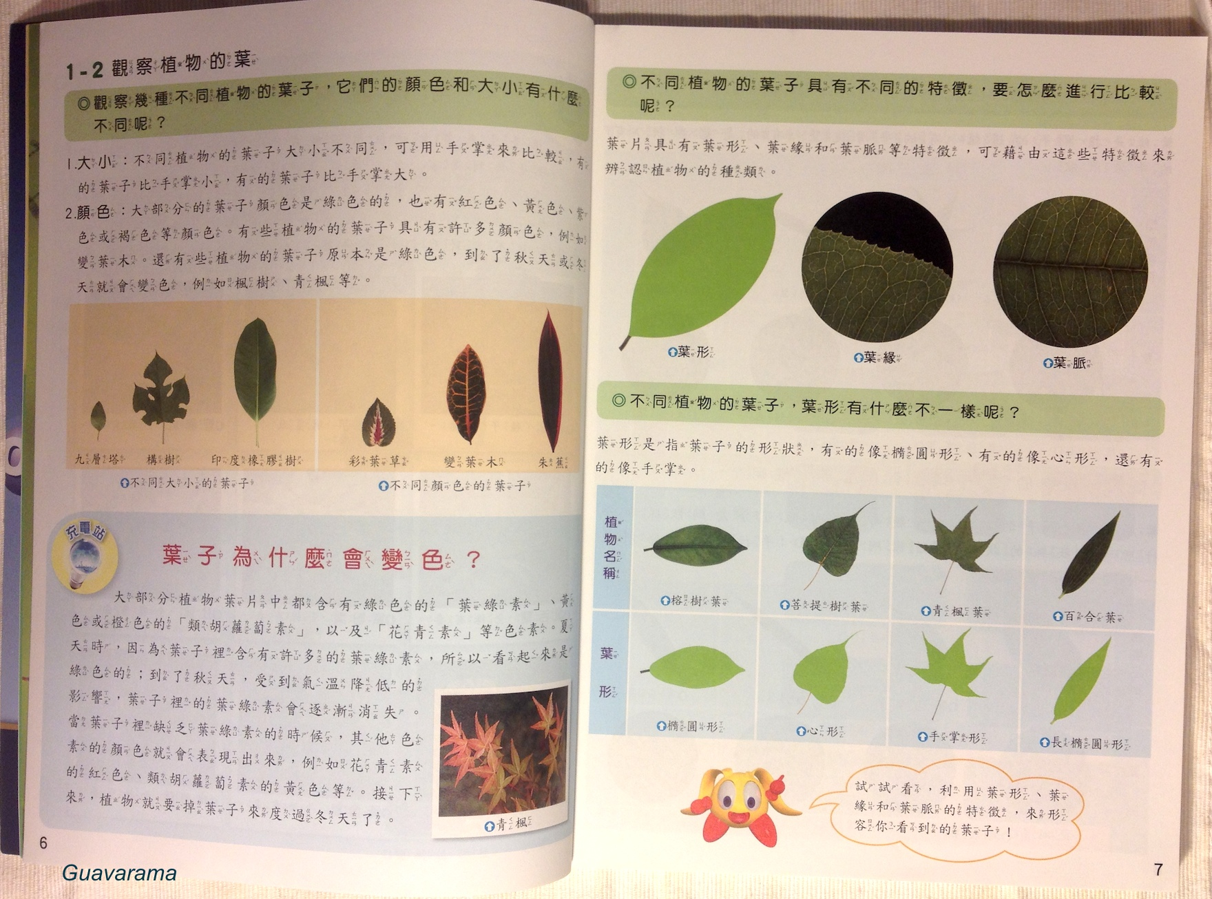 review of related literature about guava leaves The extraction of papain from papaya leaves  2 literature review 8  leaves have been used traditionally to wrap around meat and act as meat tenderizer.