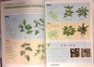 kangxuan textbook