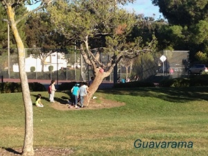 Kids climbing trees. One of the things I love to see them do